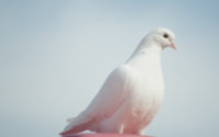 The Holy Spirit is as a dove